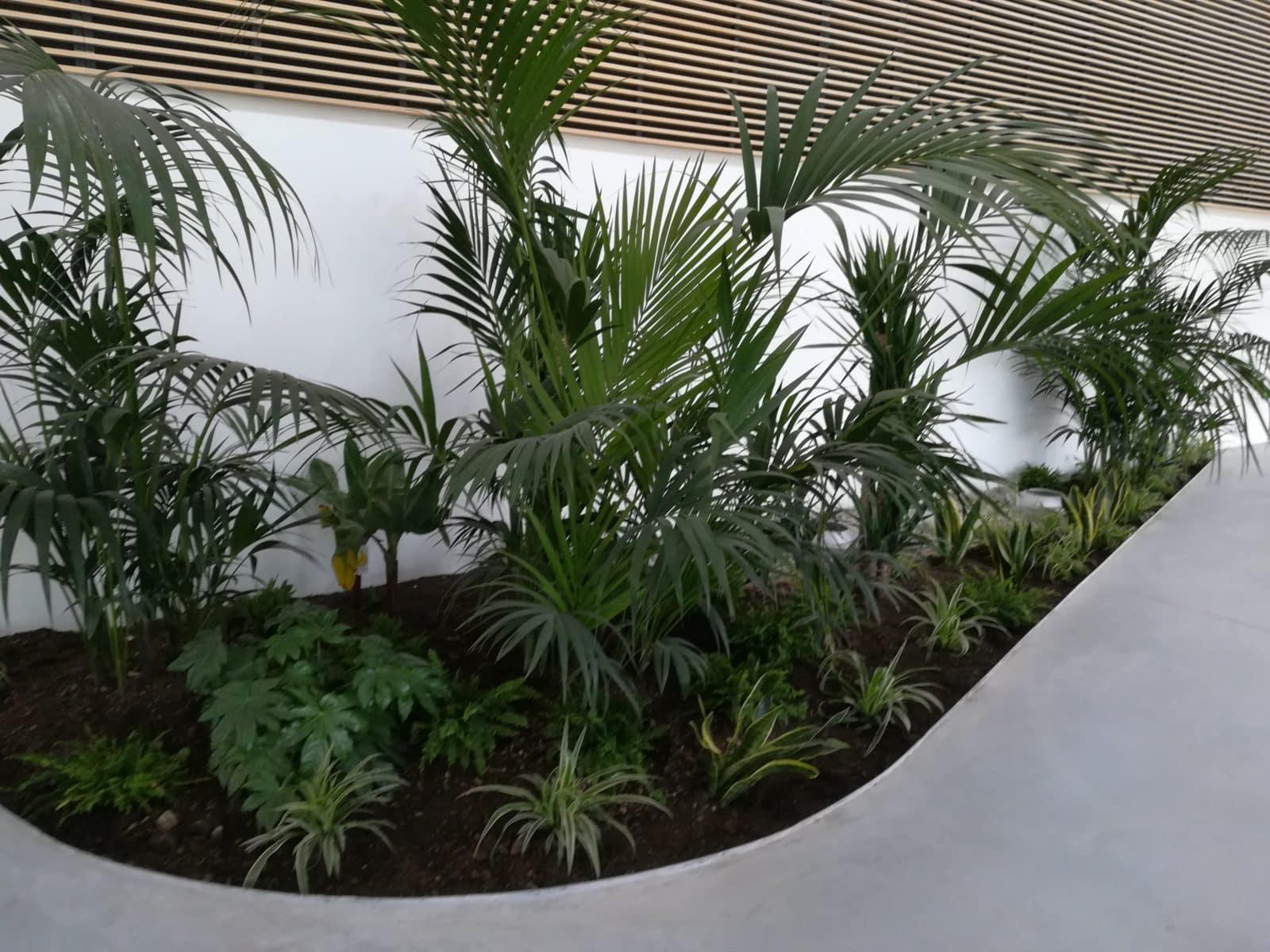 Plantation dans les locaux du collège