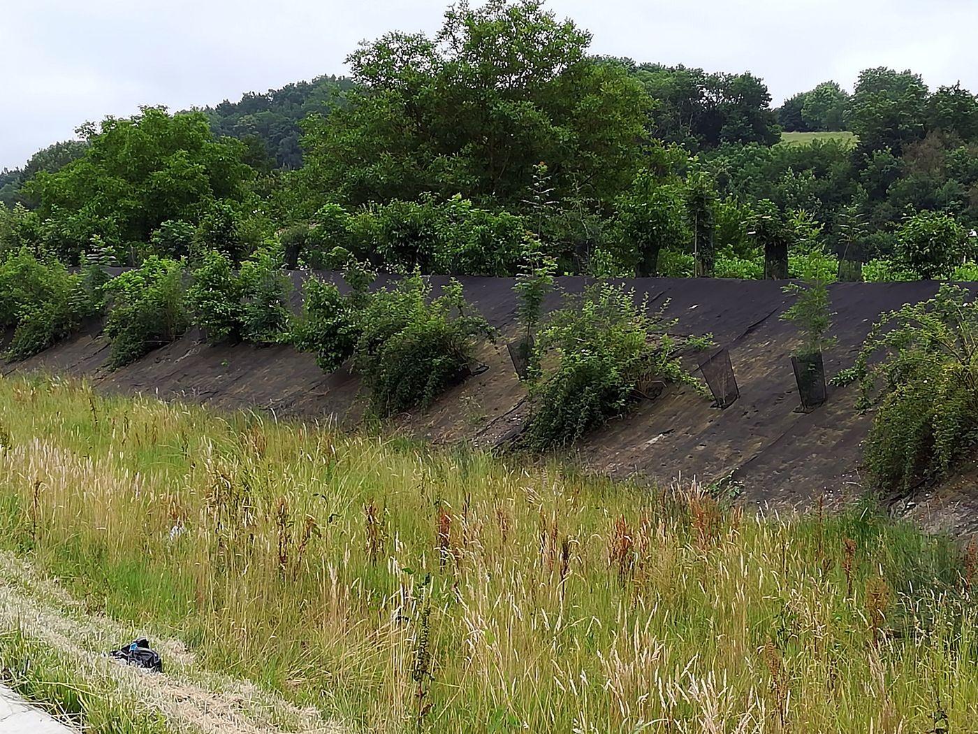 Plantations sur talus