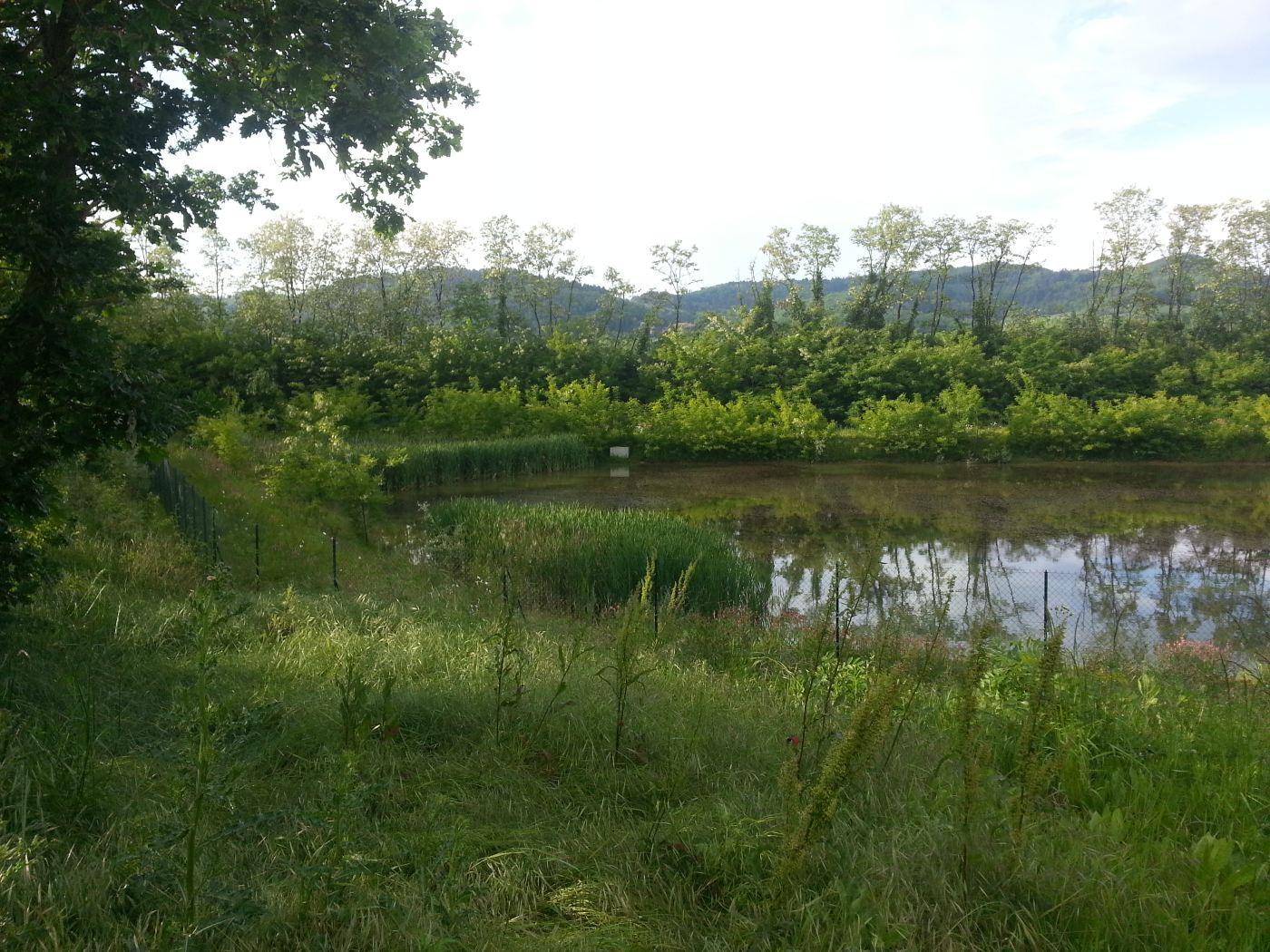 Bassin de rétention paysager